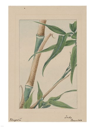 Framed Bamboo Tree Detail Print