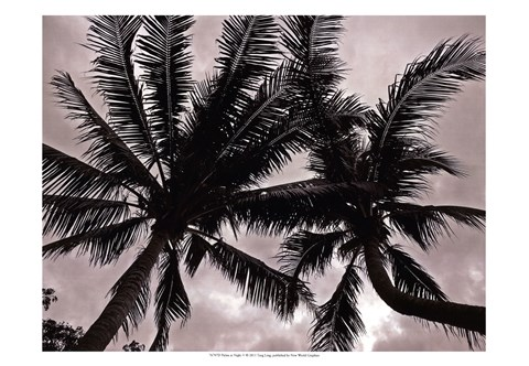 Framed Palms At Night V Print