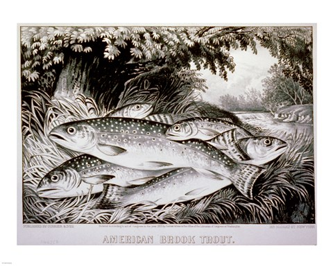 Framed American Brook Trout Print