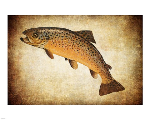 Framed Brown Trout II Print