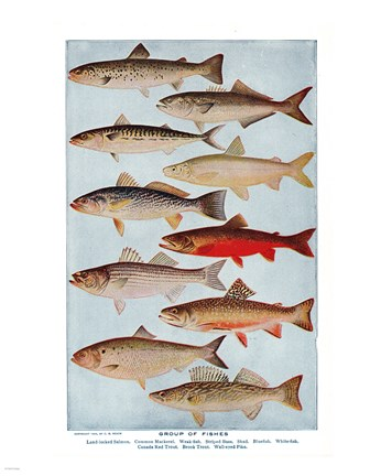 Framed Group of Fishes Print