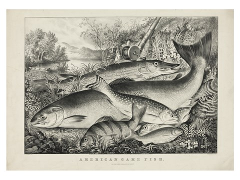 Framed American game fish Print