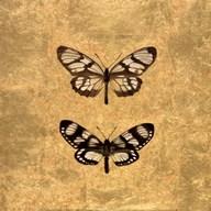 Pair of Butterflies on Gold  Fine Art Print