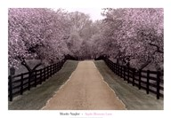 Apple Blossom Lane  Fine Art Print
