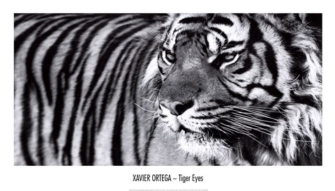 Framed Tiger Eyes Print