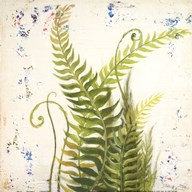 Nice Ferns I Art