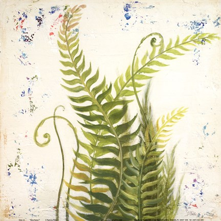 Framed Nice Ferns I Print