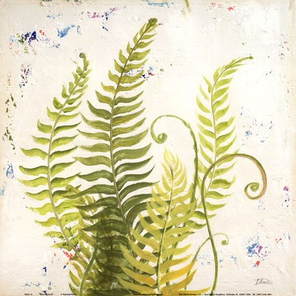 Framed Nice Ferns II Print