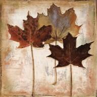 Nautral Leaves III  Fine Art Print