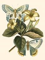 Butterfly Oasis IV Art