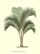 Coastal Palm I  Fine Art Print