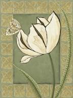 Ivory Tulip II  Fine Art Print
