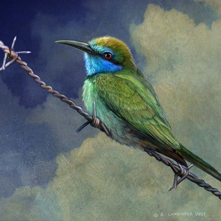 Framed Bee Eater Print