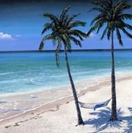 Palm island I Art