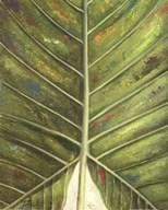 Green Zoom III  Fine Art Print