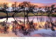 Lake Reflection  Fine Art Print