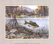 Trout Under Water  Fine Art Print