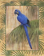 Hyacinth Macaw Art