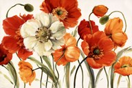 Poppies Melody  Fine Art Print