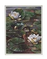 Pat Durgin - Frog in Lily Pond Size 16x20