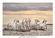 Camargue Horses - France Art