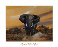 Charging Bull Elephants  Fine Art Print