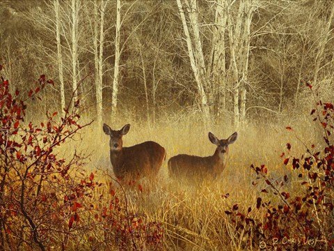 Framed Foggy Deer Print