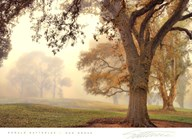 Oak Grove  Fine Art Print