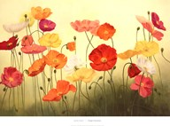 Sunlit Poppies  Fine Art Print