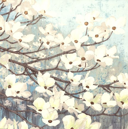 Framed Dogwood Blossoms II Print