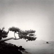Two Branched Pine, Nakano Umi, Japan  Fine Art Print