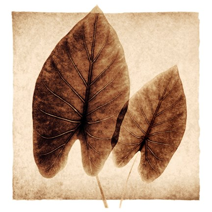 Framed Taro Leaves Print