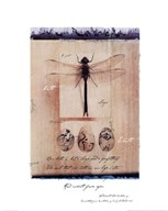 Dragon Fly  Fine Art Print