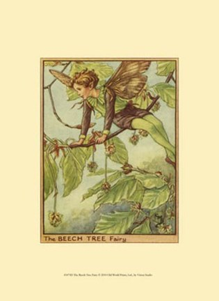 Framed Beech Tree Fairy Print