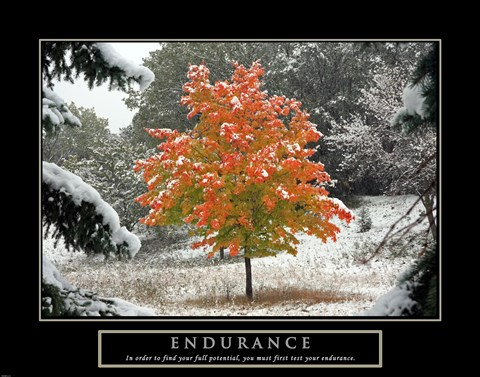 Endurance - Fall Tree