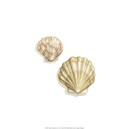 Framed Shell Collection III (A) Print