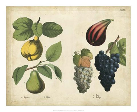 Framed Kitchen Fruits IV Print