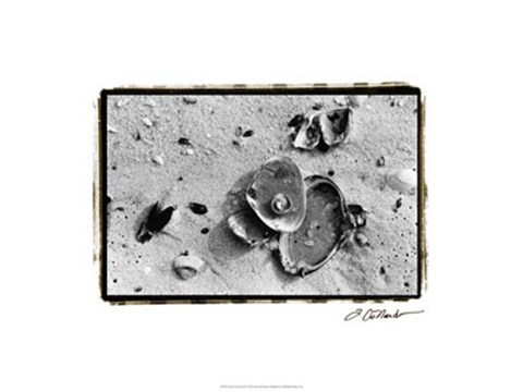 Framed Sand Treasures III Print