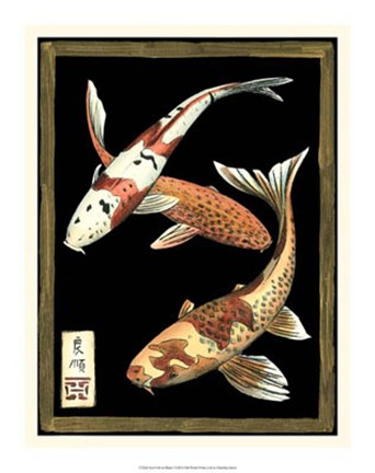 Framed Koi Fish on Black I Print