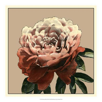 Framed Heirloom Rose II Print