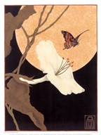 Moonflower &amp; Moth