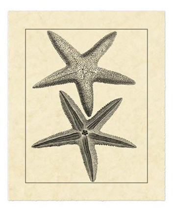 Framed Antique&Deckle Vintage Starfish I Print