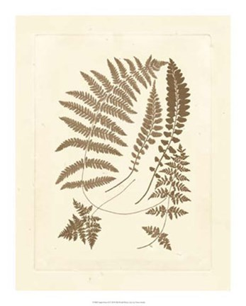 Framed Sepia Ferns II Print