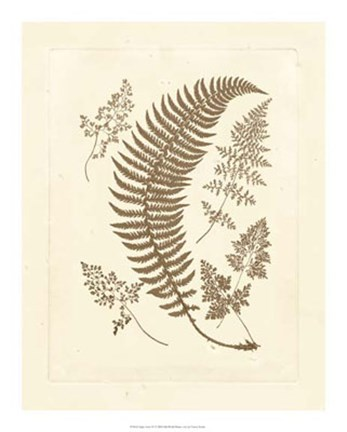 Framed Sepia Ferns IV Print