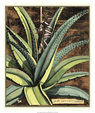 Framed Graphic Aloe III Print