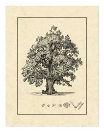 Framed Vintage Tree III Print