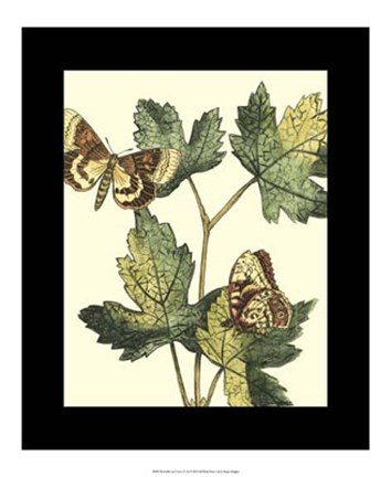 Framed Butterflies & Leaves IV Print