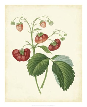 Framed Plantation Strawberries II Print