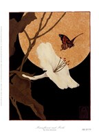 Moonflower and Moth