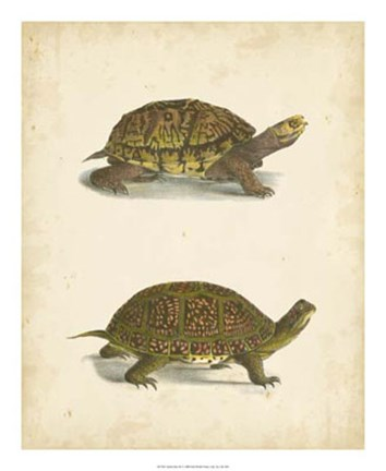 Framed Turtle Duo III Print